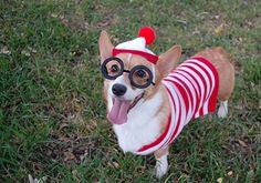 Found Him! ;) cute #DIY dog costume