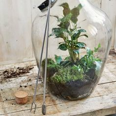 Order this Sneeboer Terrarium spade online for € Hand forged since 1913 and highest quality garden tools available. Bottle Terrarium, Bottle Garden, Garden Terrarium, Succulent Terrarium, Ikea Terrarium, Water Terrarium, Terrarium Supplies, Succulents Garden, Garden Plants