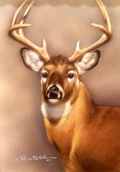 """Crown Prince-Whitetail"" by Rebecca Latham"