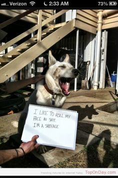 DOG SHAMING BAHAHA LOL