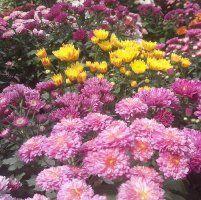 garden nurseries near me. Plant Nursery Near Me Location Polwatta Garden Nurseries