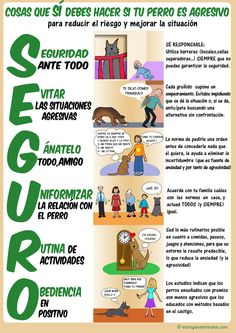 Qué debes hacer si tu perro es agresivo - What should you do if your dog is aggressive