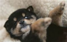 cute pics of puppies - Bing images