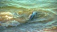The Intelligence of Dolphins (Part 1), via YouTube.