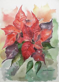 Poinsettias, watercolor flowers Watercolour by Geeta Biswas Christmas Paintings, Christmas Art, Xmas, Watercolour Painting, Watercolor Flowers, Watercolors, Winsor And Newton Watercolor, Watercolor Christmas Cards, Poinsettia