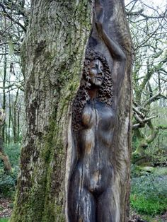 Tree goddess @ Cae Mabon Eco Retreat (Llanberis, Snowdonia National Park, Wales)