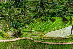 Photo Rice Terraces Bali by Daniel Heiss on 500px