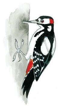 Pieni lintukuvasto - luontokuvasto lapsille Rooster, Bird, School, Birds, Roosters, Schools, Kai