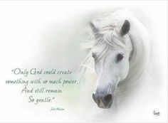 poems about arabian horses - Yahoo Image Search Results Pretty Horses, Beautiful Horses, Animals Beautiful, Adorable Animals, Beautiful People, Equine Quotes, Equestrian Quotes, Horse Photos, Horse Pictures