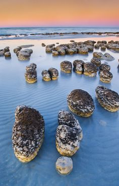 """Stromatolites in Shark Bay, Australia - stromatolites are """"living fossils"""" formed by bacteria colonies. Stromatolites formed in shallow seas more than 3 billion years ago. Oh The Places You'll Go, Places To Travel, Places To Visit, Travel Destinations, Western Australia, Australia Travel, Visit Australia, Australia Occidental, Magic Places"""