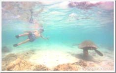 Snorkeling em Big Island - Havai