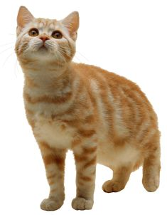 Sweet Cat Kitten Png Png Image Purepng Free Transparent Cc0 Png Image Library Cats Cats And Kittens Pets