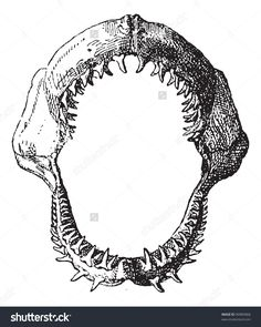 Shark Jaw, Vintage Engraved Illustration. Dictionary Of Words And ...