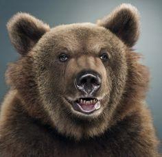 by Jill Greenberg Jill Greenberg, Animation Sketches, Bear Art, Wildlife Art, Bar, Brown Bear, Beautiful Creatures, Animal Photography, Animal Kingdom