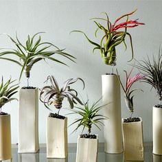Air Plants, where did you get yours?