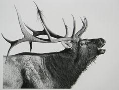 Elk- The Victor by billharrison Animal Art Prints, Animal Paintings, Deer Art, Moose Art, Elk Drawing, Elk Tattoo, Elk Silhouette, Deer Sketch, Deer Wallpaper
