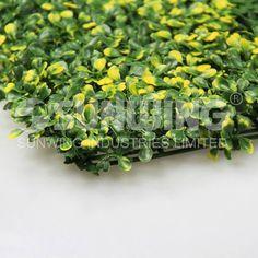 Artificial boxwood hedge, yellow color