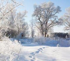 #Navidad mágica en #Laponia   Viaja con #SantaClaus al #PoloNorte #viajar #viajes #travel #traveltheworld #Finlandia #Finland #Lapland #viajesorganizados #viajesamedida