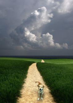 A Dog In The Morning - Photography by Carlos Gotay www.gotay.com #clouds #path #dog
