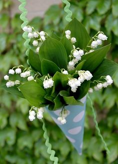 our favorite little cluster of beautiful lily of the valley, and wish you luck and prosperity in life and in love this spring!