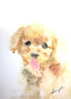 toy poodle / Saye Amebane