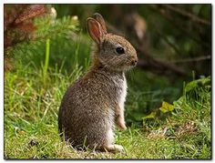 The Woodland Bunny Rabbit. Matches well with squirrels wouldn't you say? xx