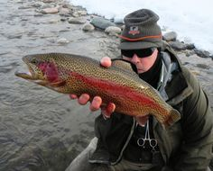 1000 images about fish species on pinterest trout for Colorado fish species