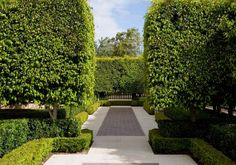 Ficus Hillii clipped to tall formal hedge Landscape Architecture, Landscape Design, Garden Design, Green Architecture, Hello Hello Plants, Decomposed Granite Patio, Ficus Microcarpa, Different Shades Of Green, Formal Gardens