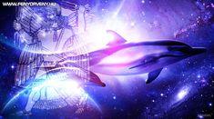 Drunvalo Melchizedek, Whale, Northern Lights, Nature, Travel, Animals, Whales, Naturaleza, Viajes