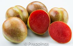 Pluot - Search by flavors, find similar varieties and discover new uses for ingredients @ preppings.com