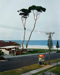 The Photograph Explained: Two Tall Trees, Mollymook by Stacy Arezou Mehrfar   The Large Format Blog