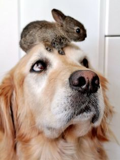 Heartwarming Stories of Animals Rescuing Each Other