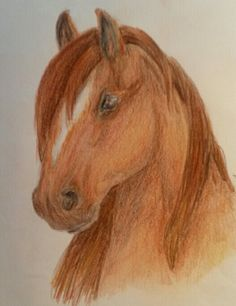 Horse drawing from me My Arts, Horses, Drawings, Animals, Animales, Animaux, Sketches, Animal, Drawing