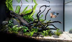 Planted Betta Tank, Betta Fish Tank, Aquarium Fish Tank, Glass Fish Tanks, Cool Fish Tanks, Small Fish Tanks, Aquascaping, Fish Tank Themes, Fish Tank Decor