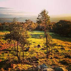 Instagrammer iasphotos captured this autumn view from The Pinnacle in Canberra