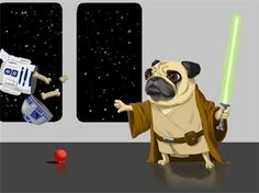Star Wars Dog - Kenobi