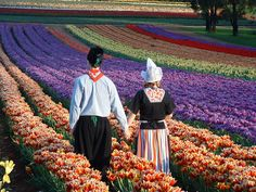 Photo from Tesslaar Tulip Festival