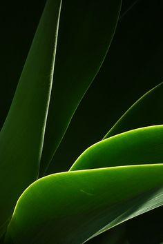 vvv Leaves