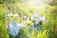 Summer Still-Life, Daisies, Yellow, Garden, Flowers