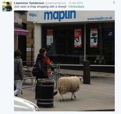 Sheep shopping near Maplin by twitter user @lawrsanderson Sheep, Twitter, Shopping
