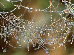 Beautiful #web with #dew