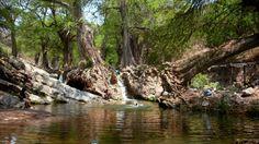 Este paraje lo encontramos en medio de una comunidad de clima árido en Puebla.Los ahuehuetes de San Agustín.