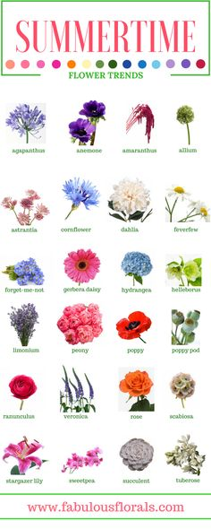 SUMMER FLOWERS - Names of the best Summer flowers.2017 wedding trends! . Your #1 source for wholesale DIY wedding flowers! #summerwedding #diyflowers #weddingflowers #weddinggreenery #weddingtrends #summerweddingflowers #FLOWERnames #diywedding #weddingcolors #flowercolors