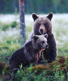 Brown Bear, Animals Beautiful, Cutest Animals