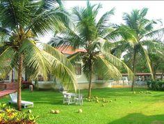 Origin of Coconut tree