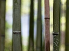 Bamboo View by RussellHartPhoto on Etsy