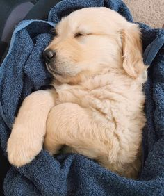 I am A Labrador Owner & In This Page I will Provide labrador retriever puppies labrador retriever facts And labrador retriever training & care Animals And Pets, Funny Animals, Cute Dogs And Puppies, Doggies, Cute Little Animals, Funny Animal Videos, Dog Pictures, Funny Dogs, Funny Humor