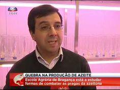 A Escola Superior Agrária de Bragança está a estudar várias formas de combater as pragas que atacam a azeitona