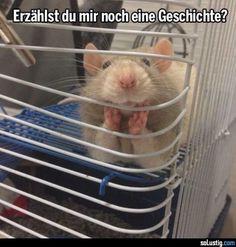 Erzählst du mir noch eine Geschichte? - #geschichte #ratte #zuhören