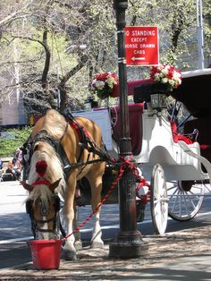 New York City - Central Park.  Horse and carriage